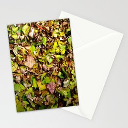 Underfoot Stationery Cards