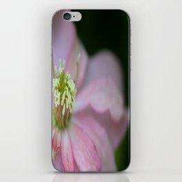 New Zealand Beauty Flower II (Macro of Clematis Montana) iPhone Skin