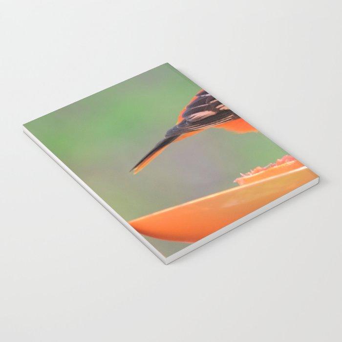 Orange Juice for Breakfast (Baltimore Oriole) Notebook