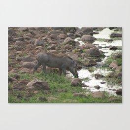 Warthog at the waterhole Canvas Print