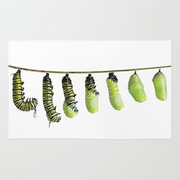 monarch caterpillar  in various stages of shedding until the skin falls away and a chrysalis  to ta Rug