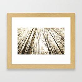 Tree Trunks I Framed Art Print