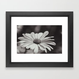 Single Daisy BW Framed Art Print