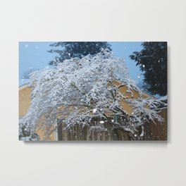 Snow covered Maple Metal Print