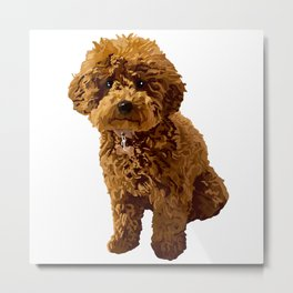 Ginger the Toy Poodle Metal Print
