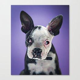 Super Pets Series 1 - Super Bugsy 2 Canvas Print