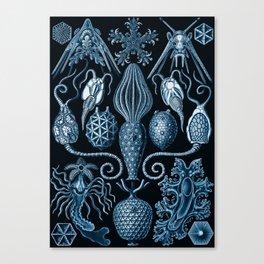 Ernst Haeckel Amphoridea Sea Life Canvas Print