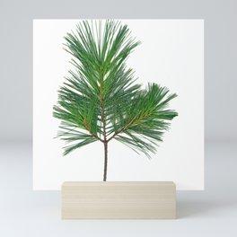 Basic Norway Pine Mini Art Print