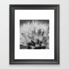 dewy dandelion Framed Art Print