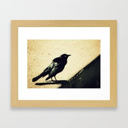 Little Blackbird Framed Art Print