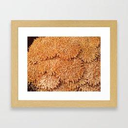 Italian Pizzelles Framed Art Print