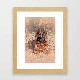 Red setter Framed Art Print