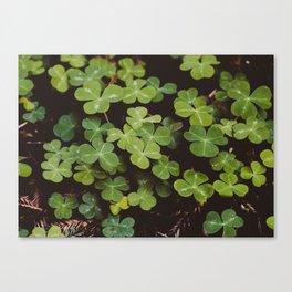 Redwood Sorrel - Nature Photography Canvas Print