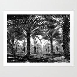 Vintage Palms Trees : Coachela Valley California 1937 Art Print