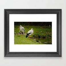 Birds in the rain Framed Art Print