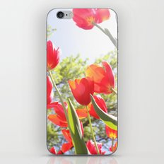 Tiptoe Through The Tulips iPhone & iPod Skin