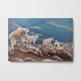 Goats II Metal Print