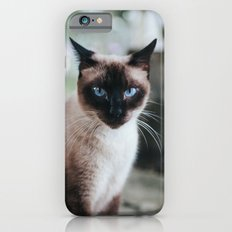 Blue-eyed Cat iPhone 6s Slim Case