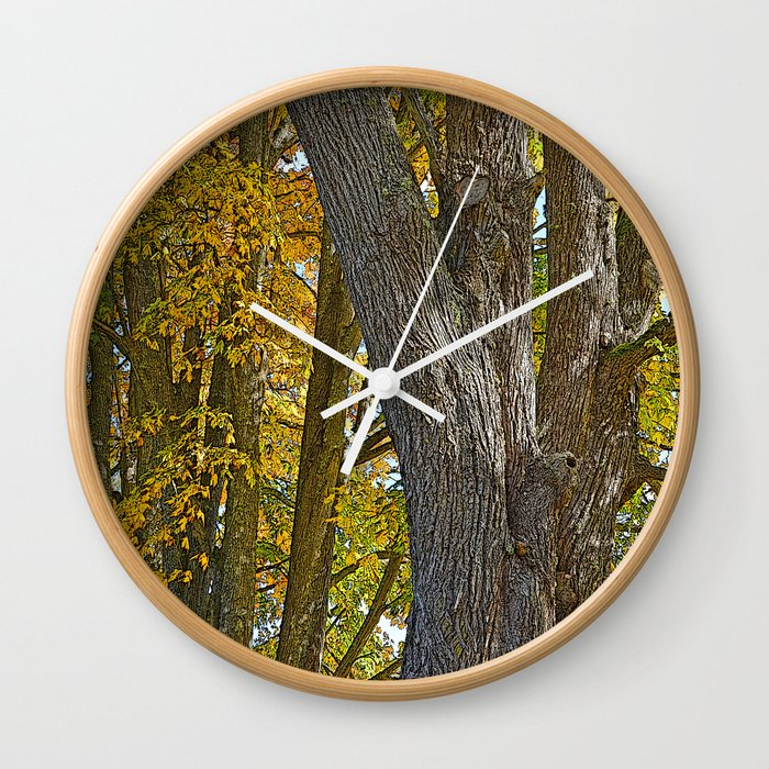 Autumn Acer Macrophyllum Autumn Bigleaf Maple Wall Clock By