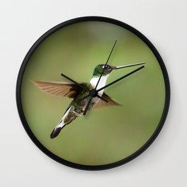 Collard Inca Hummingbird in Green Wall Clock