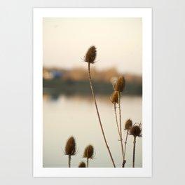 Sunny reeds Art Print