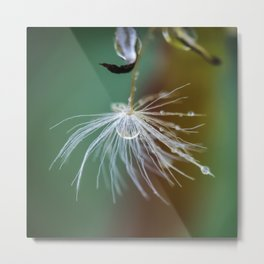 Dandelion Water Drop Macro 2 Metal Print