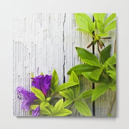 Beauty on Rustic Cedar Metal Print
