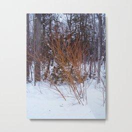 Bright Young Tree -  Fire Bush Metal Print