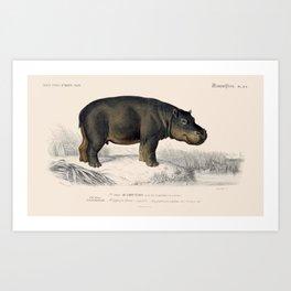 Vintage Hippopotamus Art Print