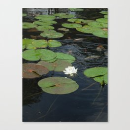 Koi and Water Lillies Canvas Print
