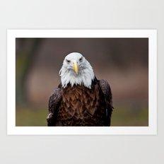 Bald Eagle Face Art Print