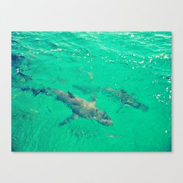 Shark Spotting  Canvas Print