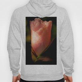 pale pink camellia Hoody