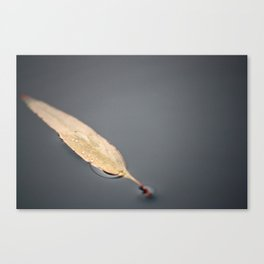 A Floating Leaf Canvas Print