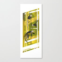 Capuchin Canvas Print