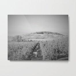 Apple Orchard, Leelanau County, Michigan, Black and White Metal Print