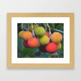 Strawberry Tree Framed Art Print