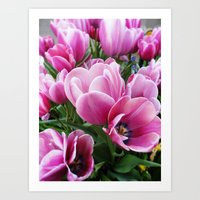 tulips Art Prints featuring tulips by Liudvika's Lens
