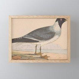 Vintage Print - A History of the Birds of Europe (1859) - White-Eyed Gull Framed Mini Art Print