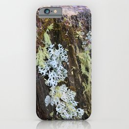 Moss and Fungi on a Forest Tree iPhone Case