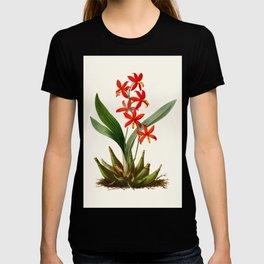 Epidendrum Selenium Vintage Scientific Botanical Flower Illustration Hand Drawn Art T-shirt
