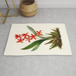 Epidendrum Selenium Vintage Scientific Botanical Flower Illustration Hand Drawn Art Rug