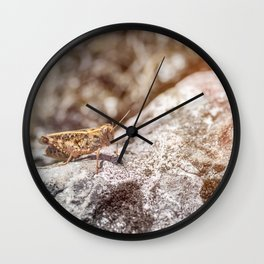 Common small brown grasshopper cricket insect on rock in macro Wall Clock