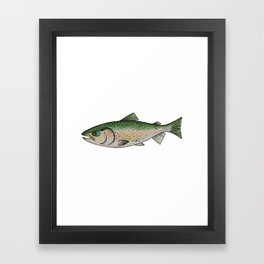 Rainbow Trout Framed Art Print