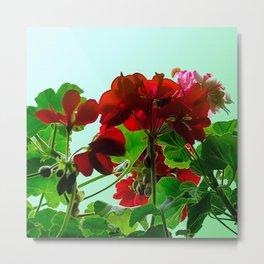 Geranium in red Metal Print