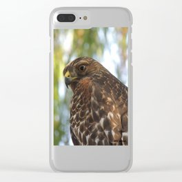 Young Red-Shouldered Hawk in a Desert Willow Clear iPhone Case