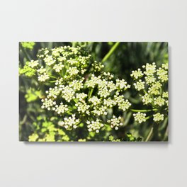 Succulent White and Green Flowers Metal Print