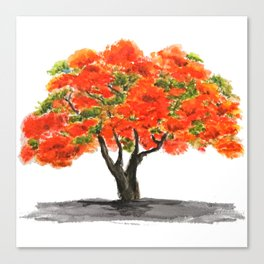 flame of the forest tree Canvas Print
