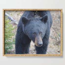 Black bear on the move Serving Tray