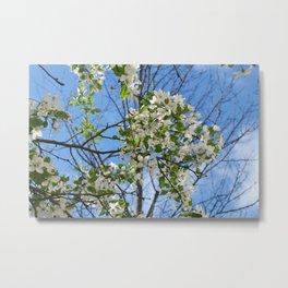 Crabapple Flowers 04 Metal Print
